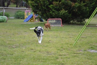 Banksia Park Puppies Lotto Sherry - 10 of 22