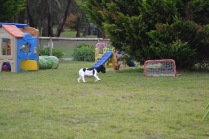 Banksia Park Puppies Lotto Sherry - 6 of 22