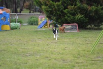 Banksia Park Puppies Lotto Sherry - 8 of 22