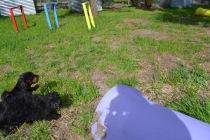 Banksia Park Puppies Mati and Pruefull - 2 of 2