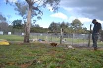 banksia-park-puppies-pavati-12-of-35