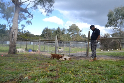banksia-park-puppies-pavati-13-of-35