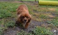 banksia-park-puppies-pavati-18-of-35