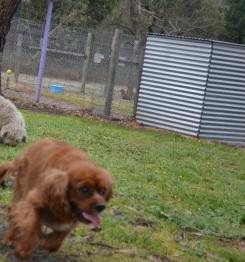banksia-park-puppies-pavati-26-of-35