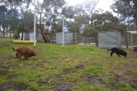 banksia-park-puppies-pavati-28-of-35