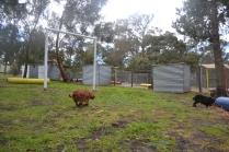 banksia-park-puppies-pavati-29-of-35