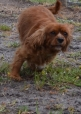 banksia-park-puppies-pavati-3-of-35