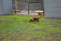 banksia-park-puppies-pavati-30-of-35