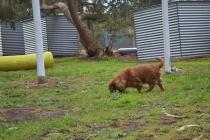 banksia-park-puppies-pavati-31-of-35