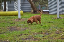 banksia-park-puppies-pavati-32-of-35