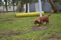 banksia-park-puppies-pavati-33-of-35