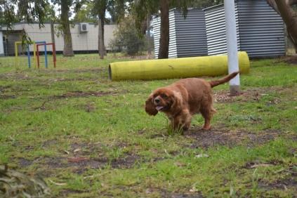 banksia-park-puppies-pavati-34-of-35