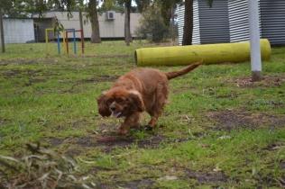 banksia-park-puppies-pavati-35-of-35