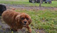 banksia-park-puppies-pavati-4-of-35