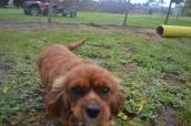 banksia-park-puppies-pavati-5-of-35