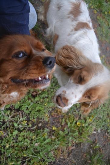 banksia-park-puppies-pavati-7-of-35