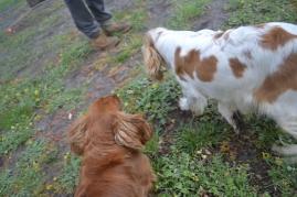 banksia-park-puppies-pavati-9-of-35