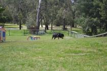banksia-park-puppies-pruefull-11-of-36