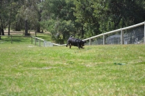 banksia-park-puppies-pruefull-13-of-36