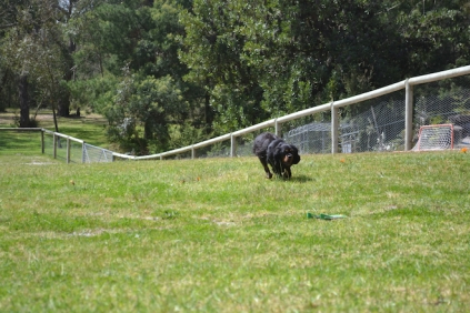 banksia-park-puppies-pruefull-14-of-36