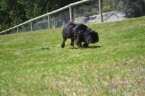 banksia-park-puppies-pruefull-16-of-36