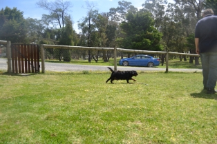 banksia-park-puppies-pruefull-17-of-36