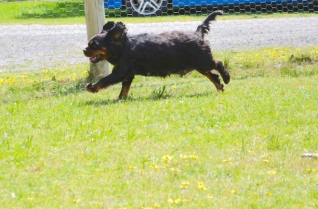 banksia-park-puppies-pruefull-18-of-36