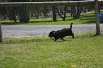 banksia-park-puppies-pruefull-19-of-36