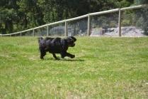banksia-park-puppies-pruefull-2-of-36