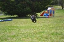 banksia-park-puppies-pruefull-20-of-36