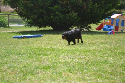 banksia-park-puppies-pruefull-21-of-36