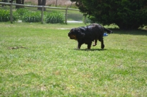 banksia-park-puppies-pruefull-23-of-36