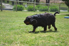 banksia-park-puppies-pruefull-25-of-36