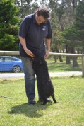 banksia-park-puppies-pruefull-27-of-36