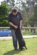 banksia-park-puppies-pruefull-28-of-36
