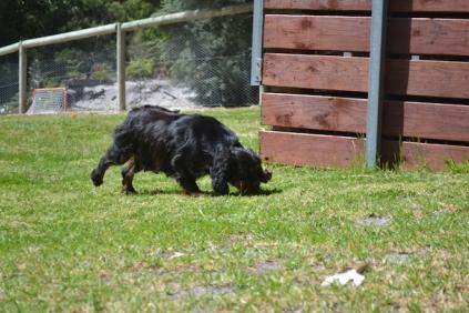 banksia-park-puppies-pruefull-3-of-36