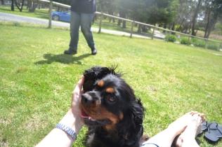 banksia-park-puppies-pruefull-30-of-36