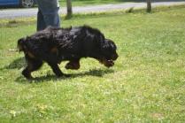 banksia-park-puppies-pruefull-5-of-36
