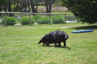 banksia-park-puppies-pruefull-6-of-36