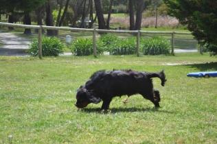 banksia-park-puppies-pruefull-7-of-36