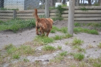 banksia-park-puppies-roz-2-of-8