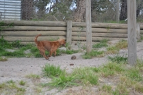 banksia-park-puppies-roz-3-of-8