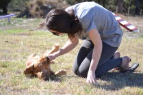 Banksia Park Puppies Sherry - 1 of 11 (4)