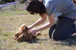Banksia Park Puppies Sherry - 1 of 11 (8)