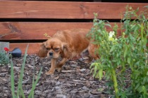 Banksia Park Puppies Sherry - 16 of 22