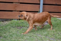 Banksia Park Puppies Sherry - 18 of 22