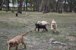 Add New Page ‹ Banksia Park Puppies — WordPress