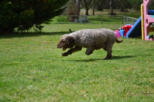 banksia-park-puppies-fire-1-of-29