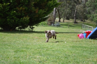banksia-park-puppies-fire-11-of-29
