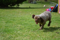 banksia-park-puppies-fire-17-of-29